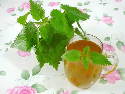 Крапивный чай и кустик крапивы