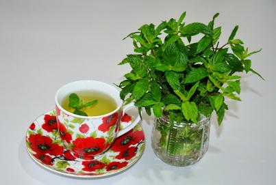 Завариваем мятный чай