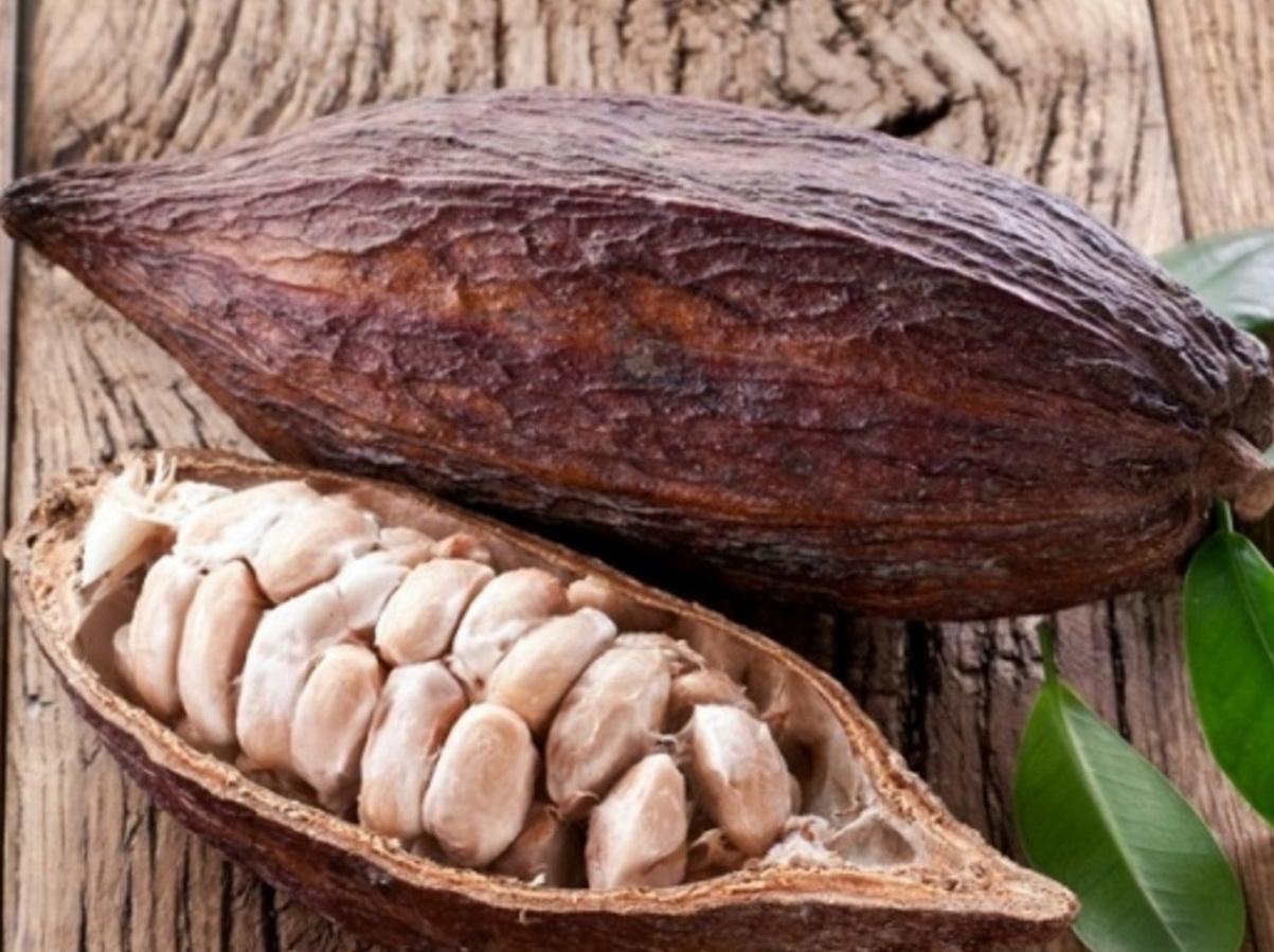 Плоды какао в стручке