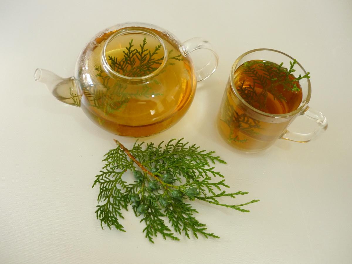 Туя-чай